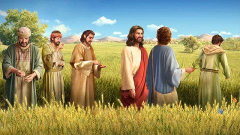 O Filho do homem até do sábado é o Senhor (parte 1)
