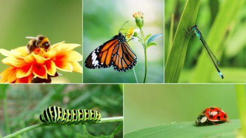 O Criador fala e cada espécie de criatura vivente em sua mente faz sua aparição, uma após a outra