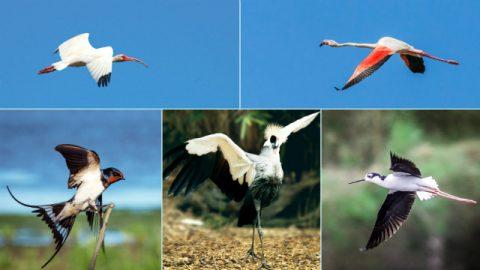 Vários pássaros