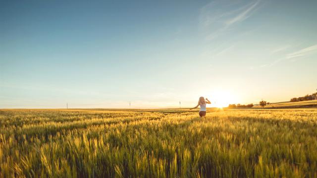 pessoa honesta,Jovem mulher correndo pelo campo de trigo no pôr do sol