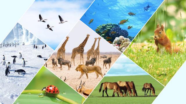 Deus traçou limites para os vários pássaros e animais, peixes, insetos e todas as plantas