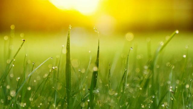 Sol, chuva e grama