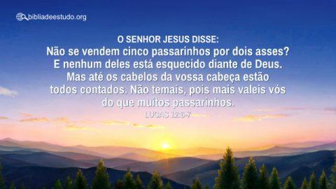 Versículo do Dia: Devocional Lucas 12:6-7